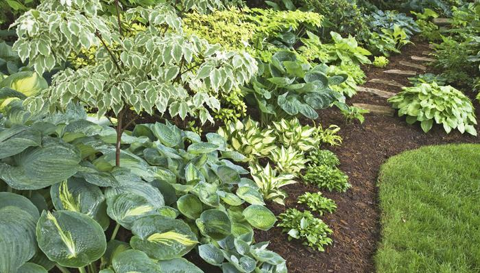 The natural beauty of Hostas